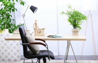 Office plants - better air quality, more productivity and satisfaction